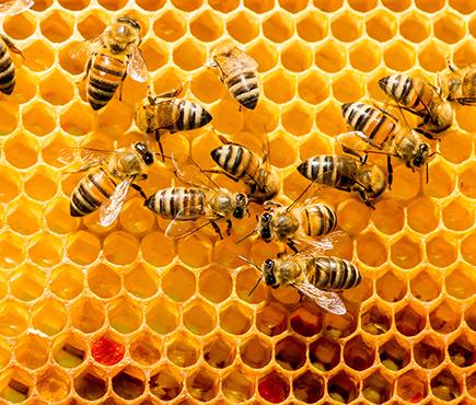 Μελισσοκομία ΙΕΚ PRAXIS